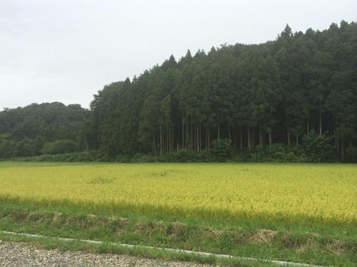 福島の田んぼの中で