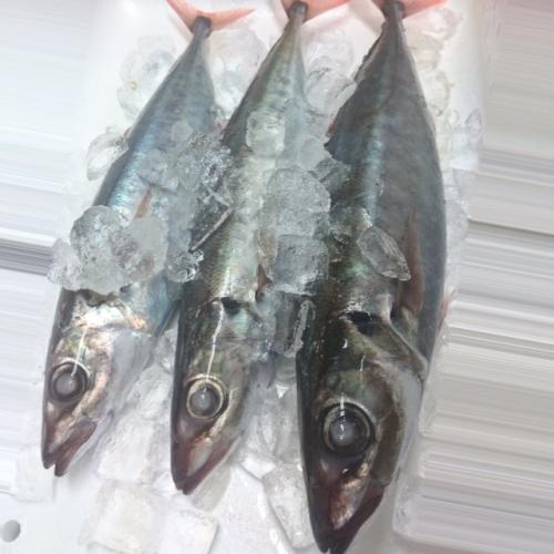 最高に美味い魚の一つだと思う。