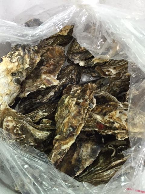 生牡蠣 北海道 仙鳳趾産