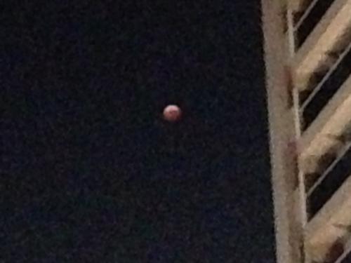 月はどこだ?