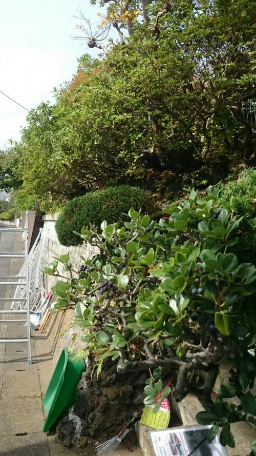 鎌倉市で植木の剪定