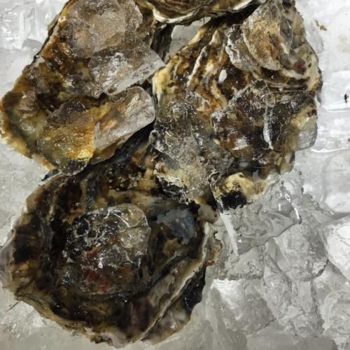 北海道仙鳳趾産 真牡蠣